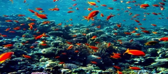 The Coral Sea tourism destinations