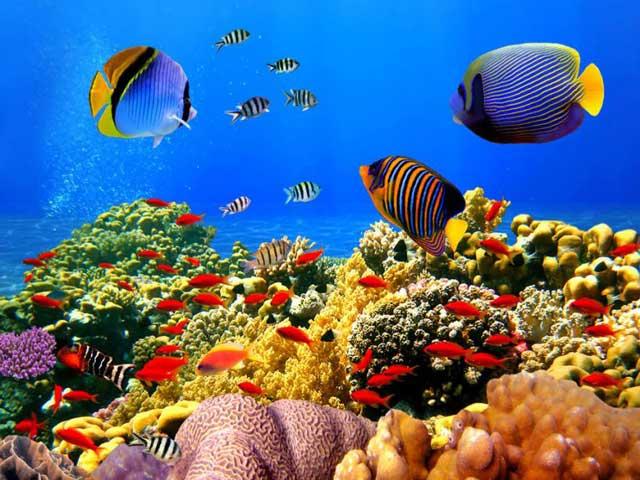 Scuba-Diving7